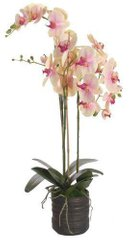 Исскуственные растения PHALAENOPSIS X 3 POTTED yellow purple 37056-SH L90CM